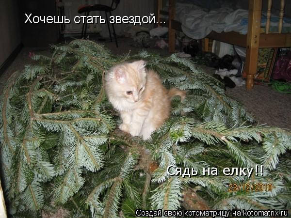 Котоматрица: Хочешь стать звездой... Сядь на елку!!
