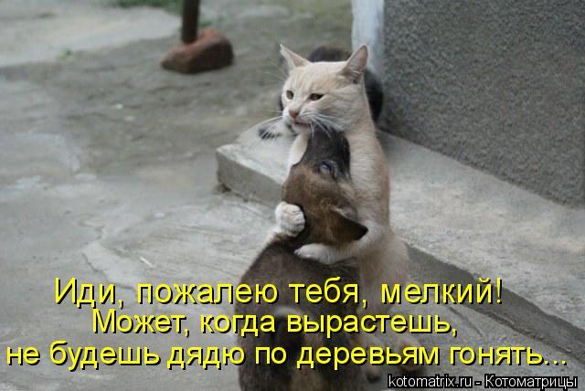 Котоматрица: Иди, пожалею тебя, мелкий! Может, когда вырастешь,  не будешь дядю по деревьям гонять...