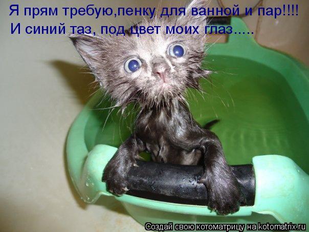Котоматрица: Я прям требую,пенку для ванной и пар!!!! И синий таз, под цвет моих глаз.....