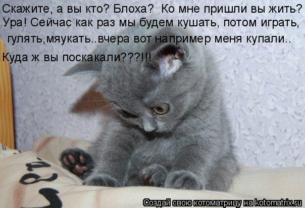Котоматрица: Скажите, а вы кто? Блоха?  Ко мне пришли вы жить? Ура! Сейчас как раз мы будем кушать, потом играть, гулять,мяукать..вчера вот например меня куп