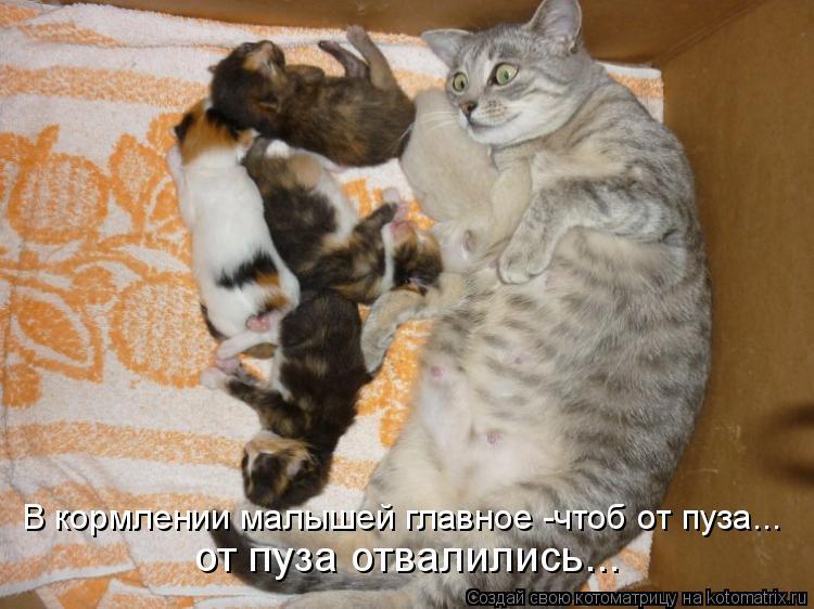 Котоматрица: В кормлении малышей главное -чтоб от пуза... от пуза отвалились...