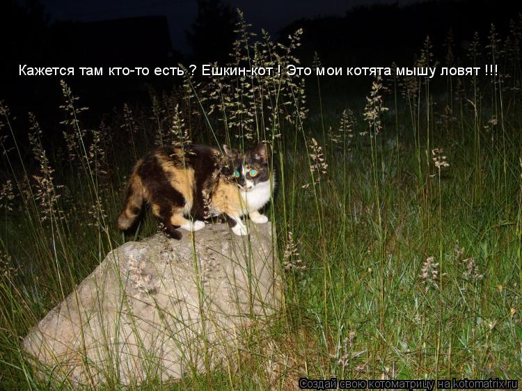 Котоматрица: Кажется там кто-то есть ? Ешкин-кот ! Это мои котята мышу ловят !!!