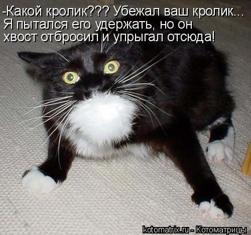 Котоматрица: -Какой кролик??? Убежал ваш кролик... Я пытался его удержать, но он хвост отбросил и упрыгал отсюда!