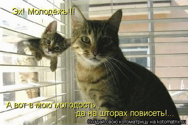Котоматрица: Эх! Молодёжь!!!  А вот в мою молодость , да на шторах повисеть!...
