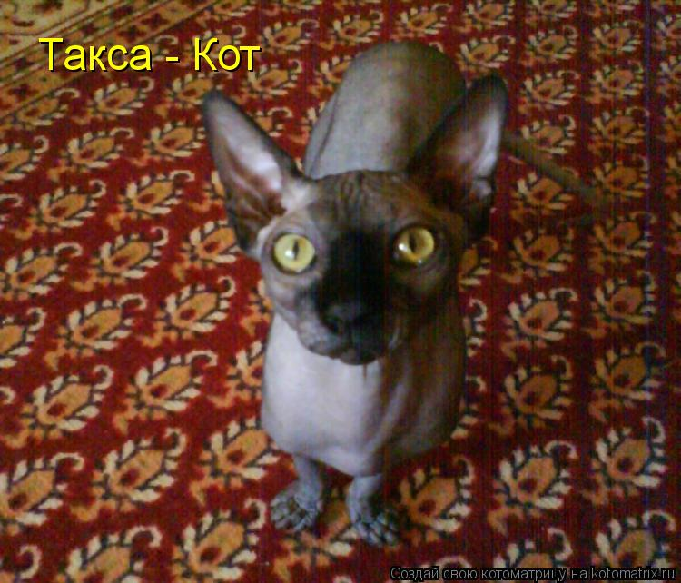 Котоматрица: Такса - Кот