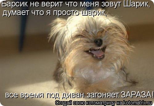 Котоматрица: Барсик не верит что меня зовут Шарик,  думает что я просто шарик,   все время под диван загоняет. ЗАРАЗА!