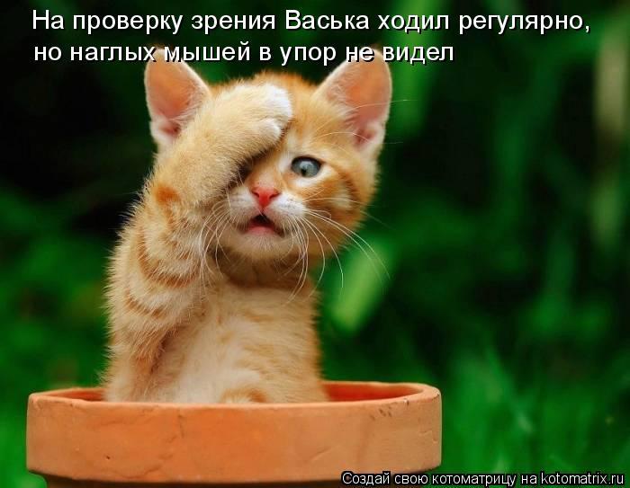 Котоматрица: На проверку зрения Васька ходил регулярно, но наглых мышей в упор не видел