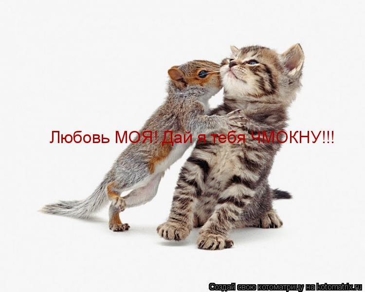 Котоматрица: Любовь МОЯ! Дай я тебя ЧМОКНУ!!!