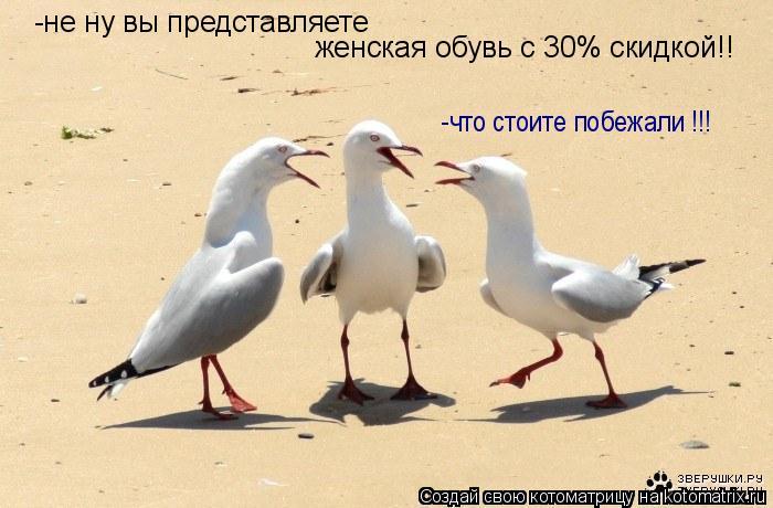 Котоматрица: -не ну вы представляете  женская обувь с 30% скидкой!! -что стоите побежали !!!