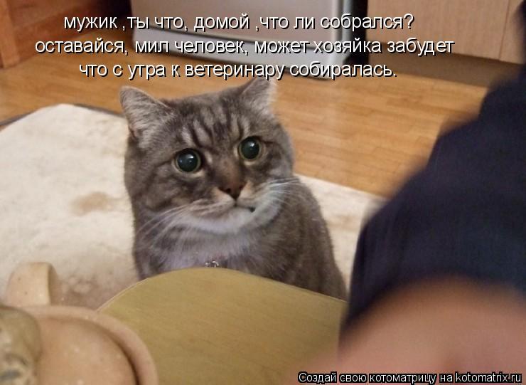 Котоматрица: мужик ,ты что, домой ,что ли собрался? оставайся, мил человек, может хозяйка забудет  что с утра к ветеринару собиралась.