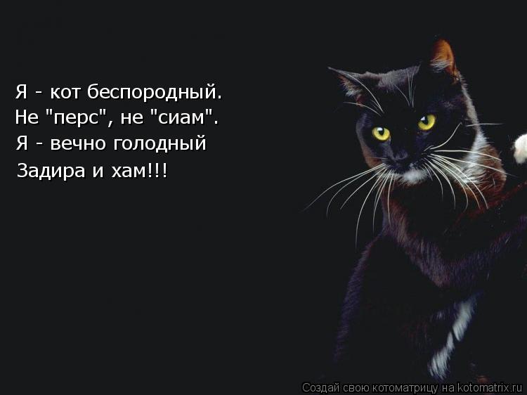 """Котоматрица: Я - кот беспородный.  Не """"перс"""", не """"сиам"""". Я - вечно голодный Задира и хам!!!"""