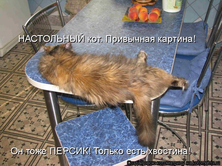 Котоматрица - НАСТОЛЬНЫЙ кот. Привычная картина! Он тоже ПЕРСИК! Только есть хвостин