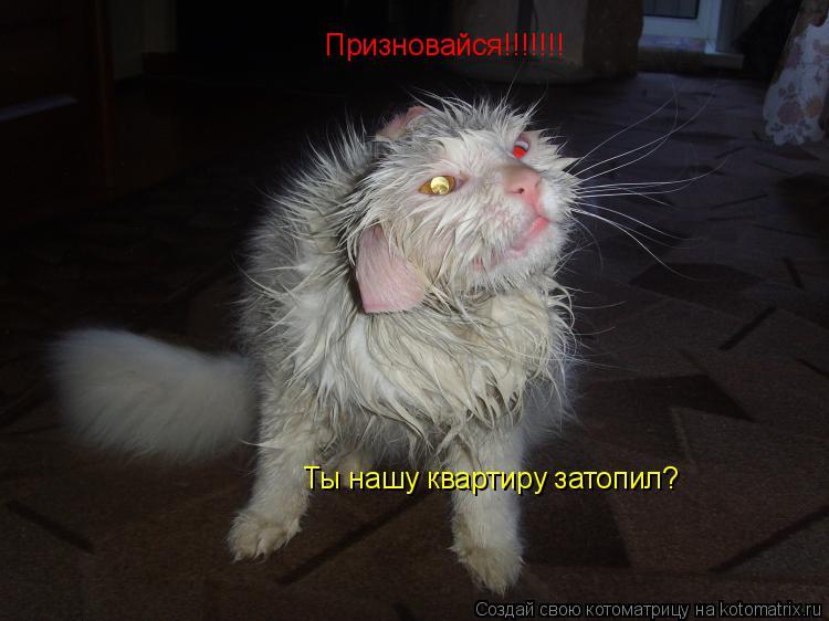 Котоматрица: Призновайся!!!!!!! Ты нашу квартиру затопил?