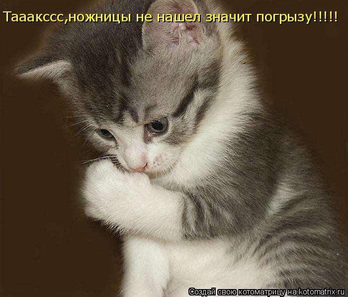 Котоматрица: Тааакссс,ножницы не нашел значит погрызу!!!!!