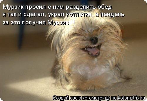 Котоматрица: Мурзик просил с ним разделить обед я так и сделал, украл котлетки, а пендель за это получил Мурзик!!!