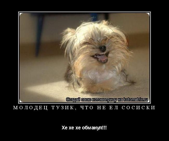 Котоматрица: Молодец Тузик, что не ел сосиски Хе хе хе обманул!!!