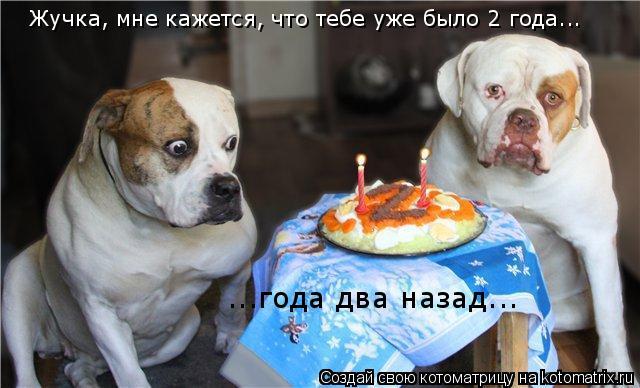 Котоматрица: Жучка, мне кажется, что тебе уже было 2 года... ...года два назад...