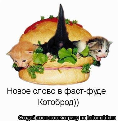 Котоматрица: Новое слово в фаст-фуде Котоброд))