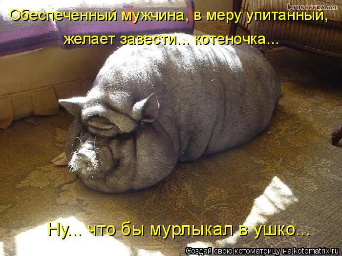 Котоматрица: Обеспеченный мужчина, в меру упитанный,  желает завести... котеночка... Ну... что бы мурлыкал в ушко...