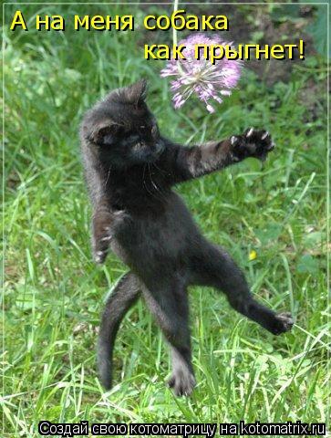 Котоматрица: А на меня собака  как прыгнет!