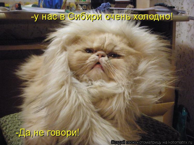 Котоматрица: -у нас в Сибири очень холодно! -Да,не говори!