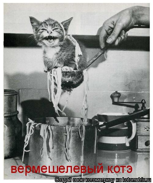 Котоматрица: вермешелевый котэ