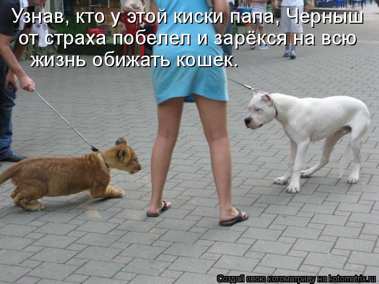 Котоматрица: Узнав, кто у этой киски папа, Черныш  от страха побелел и зарёкся на всю  жизнь обижать кошек.