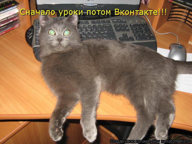 Котоматрица: Сначало уроки потом Вконтакте!!!
