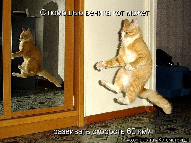 Котоматрица: С помощью веника кот может развивать скорость 60 км\ч С помощью веника кот может  развивать скорость 60 км\ч