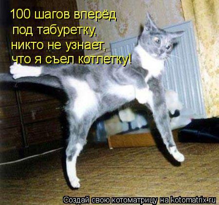 Котоматрица: 100 шагов вперёд под табуретку, никто не узнает, что я съел котлетку!