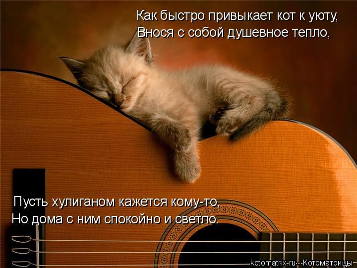 Котоматрица: Как быстро привыкает кот к уюту, Внося с собой душевное тепло, Пусть хулиганом кажется кому-то, Но дома с ним спокойно и светло.