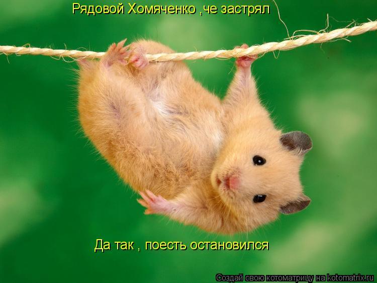 Котоматрица: Рядовой Хомяченко ,че застрял Да так , поесть остановился