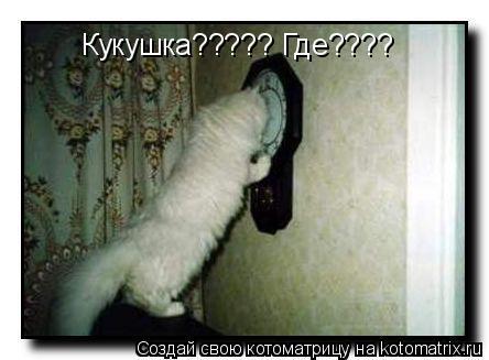 Котоматрица: Кукушка????? Где????