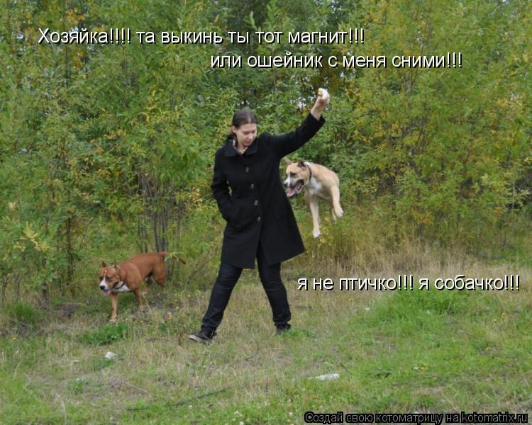 Котоматрица: Хозяйка!!!! та выкинь ты тот магнит!!!  или ошейник с меня сними!!!  я не птичко!!! я собачко!!!