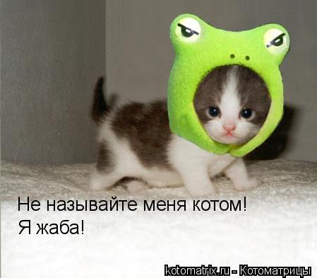 Котоматрица: Не называйте меня котом! Я жаба!