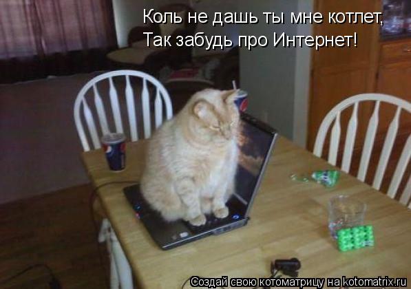Котоматрица: Коль не дашь ты мне котлет, Так забудь про Интернет!