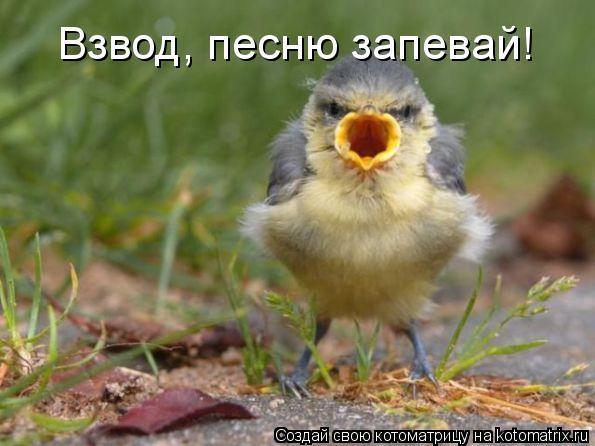 Котоматрица: Взвод, песню запевай!