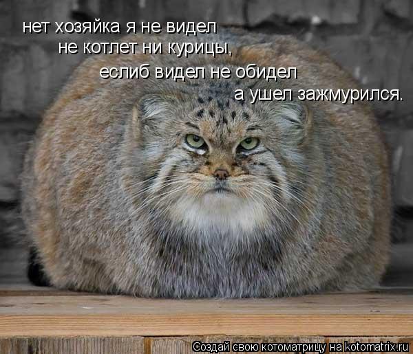 Котоматрица: нет хозяйка я не видел не котлет ни курицы,  еслиб видел не обидел а ушел зажмурился.
