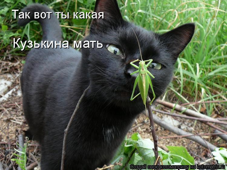 Котоматрица: Так вот ты какая  Кузькина мать
