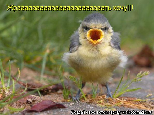 Котоматрица: Жрааааааааааааааааааааааать хочу!!!