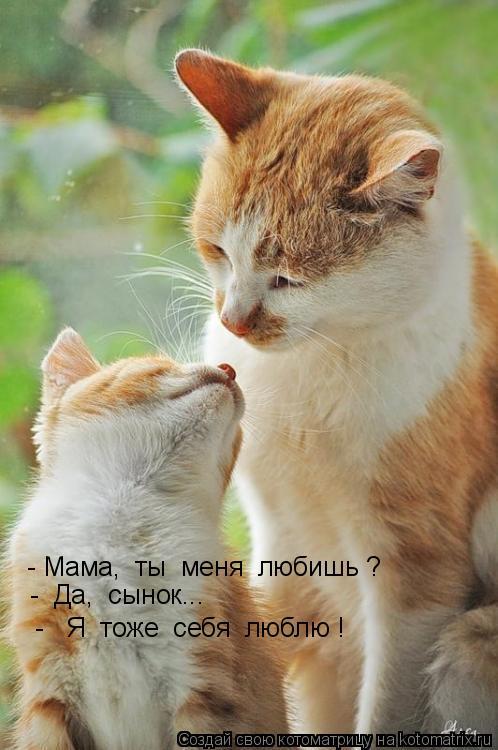 Котоматрица: - Мама,  ты  меня  любишь ?  -  Да,  сынок...  -   Я  тоже  себя  люблю !