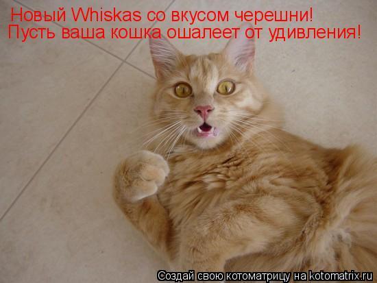 Котоматрица: Новый Whiskas со вкусом черешни! Пусть ваша кошка ошалеет от удивления!