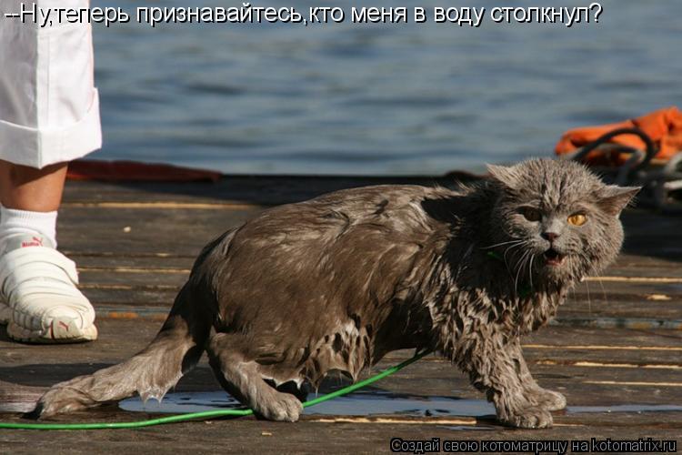 Котоматрица: --Ну,теперь признавайтесь,кто меня в воду столкнул?