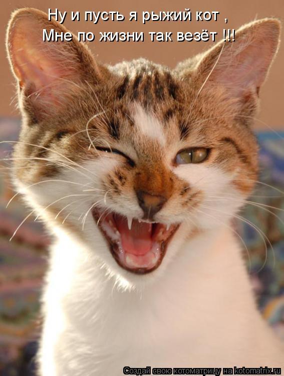 Котоматрица: Ну и пусть я рыжий кот ,  Мне по жизни так везёт !!!