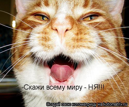 Котоматрица: -Скажи всему миру - НЯ!!!