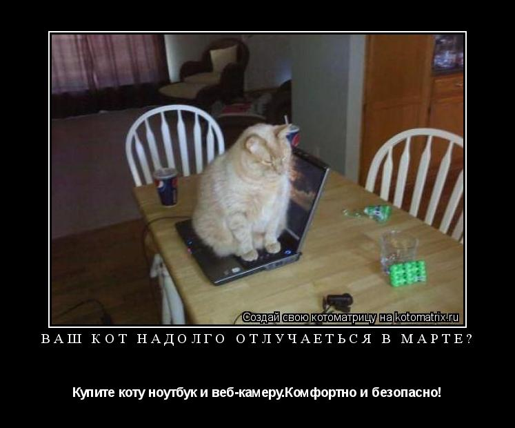 Котоматрица: Ваш кот надолго отлучаеться в марте? Купите коту ноутбук и веб-камеру.Комфортно и безопасно!
