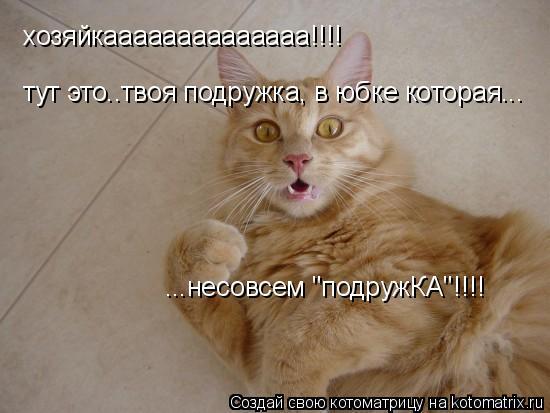 "Котоматрица: хозяйкаааааааааааааа!!!! тут это..твоя подружка, в юбке которая... ...несовсем ""подружКА""!!!!"