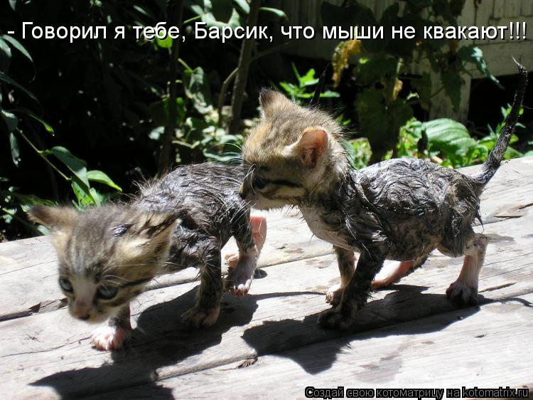 Котоматрица: - Говорил я тебе, Барсик, что мыши не квакают!!!