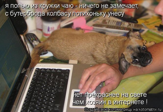 Котоматрица: я попью из кружки чаю - ничего не замечает, с бутерброда колбасу потихоньку унесу нет прекраснее на свете чем хозяин в интернете !