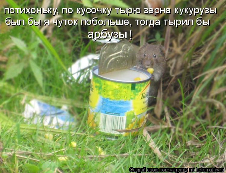 Котоматрица: потихоньку, по кусочку тырю зерна кукурузы был бы я чуток побольше, тогда тырил бы арбузы !